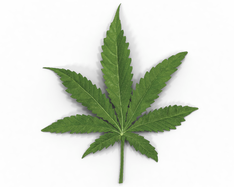 Marijuana Prevention